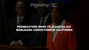 California clears 54,000 marijuana convictions